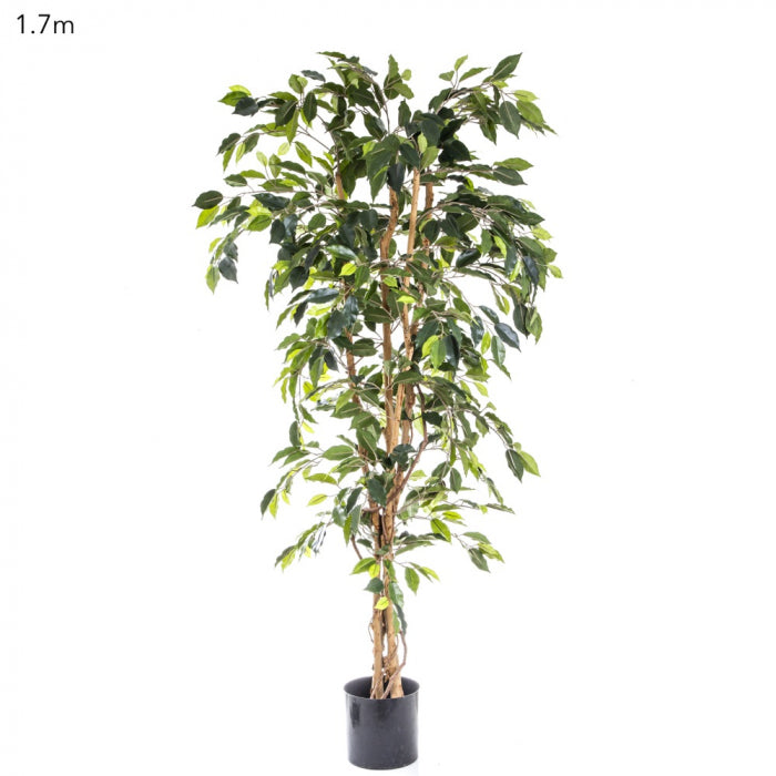 Artificial Ficus Tree 1.7m - House of Isabella AU