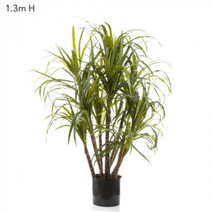 Artificial Dracaena Marginata 1.3m 10 Heads