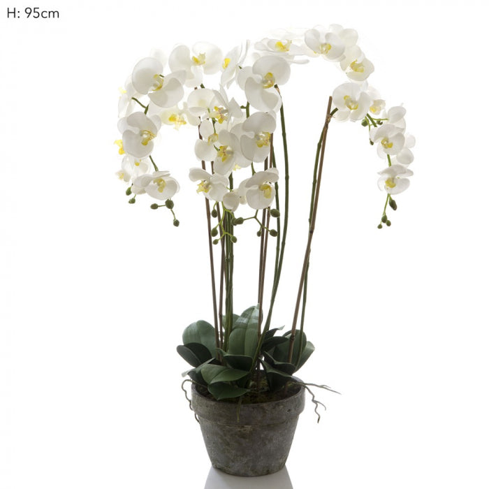 Artificial Orchid in Terracotta Pot White - House of Isabella AU