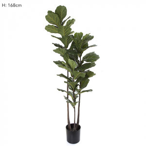 Artificial Fiddle Leaf Tree 168cm