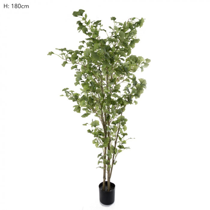 Artificial Ginko Tree Potted 1.8m 786 Lvs - House of Isabella AU
