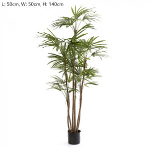 1.2m Honey Lady Palm x7 432 Lvs