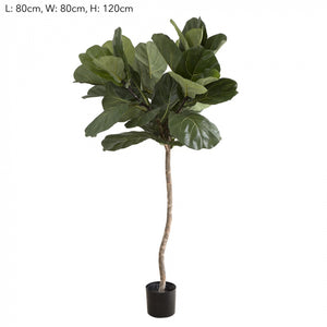 1.2m Fiddle Leaf Tree w/42 Lvs