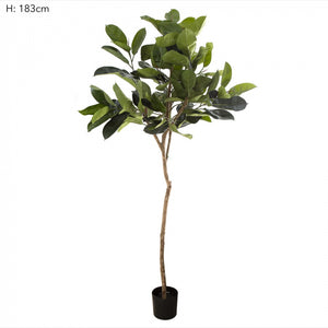 Artificial 1.83m Rubber Plant Tree w/109 Lvs
