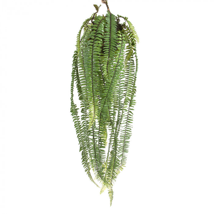 Large Hanging Fern Green