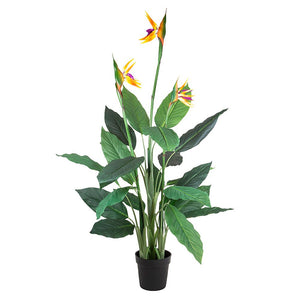 Bird of Paradise Tree 26 Lvs 3 Fl 1.5m