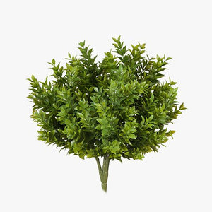 6 x Boxwood Bush