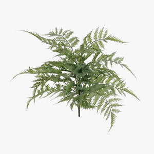12 x Fern Leather Bush