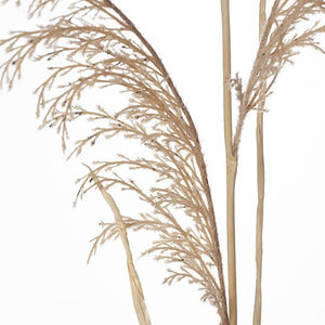 12 x Reed Grass Spray