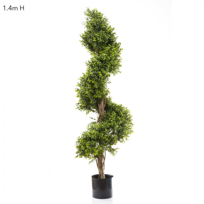 Boxwood Spiral Tree Budget 1.4m