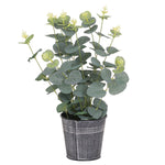 Eucalyptus in Tin Pot
