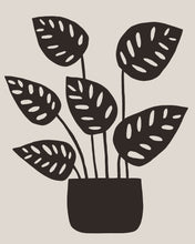 Load image into Gallery viewer, Monstera Obliqua no.1 Print