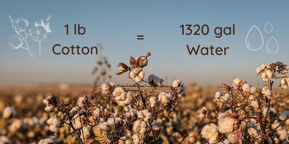 How much water does it take to grow one pound of cotton