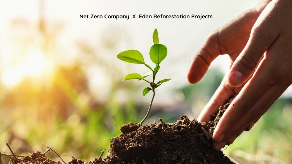 Net Zero and Eden Reforestation Project Collaboration