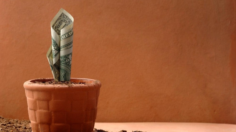 Growing money on a pot
