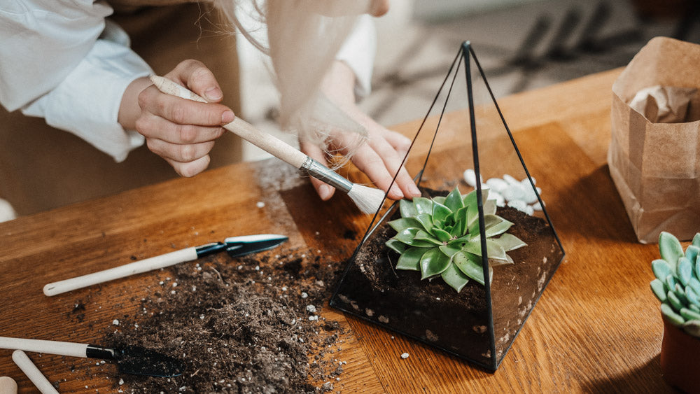 Gift Living Plants and Seeds For Mother's Day