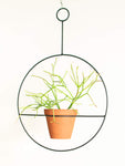 Fire Stick Pencil Plant in Plantie Hanging Pot Large