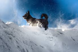Winter Safety Tips For Dogs