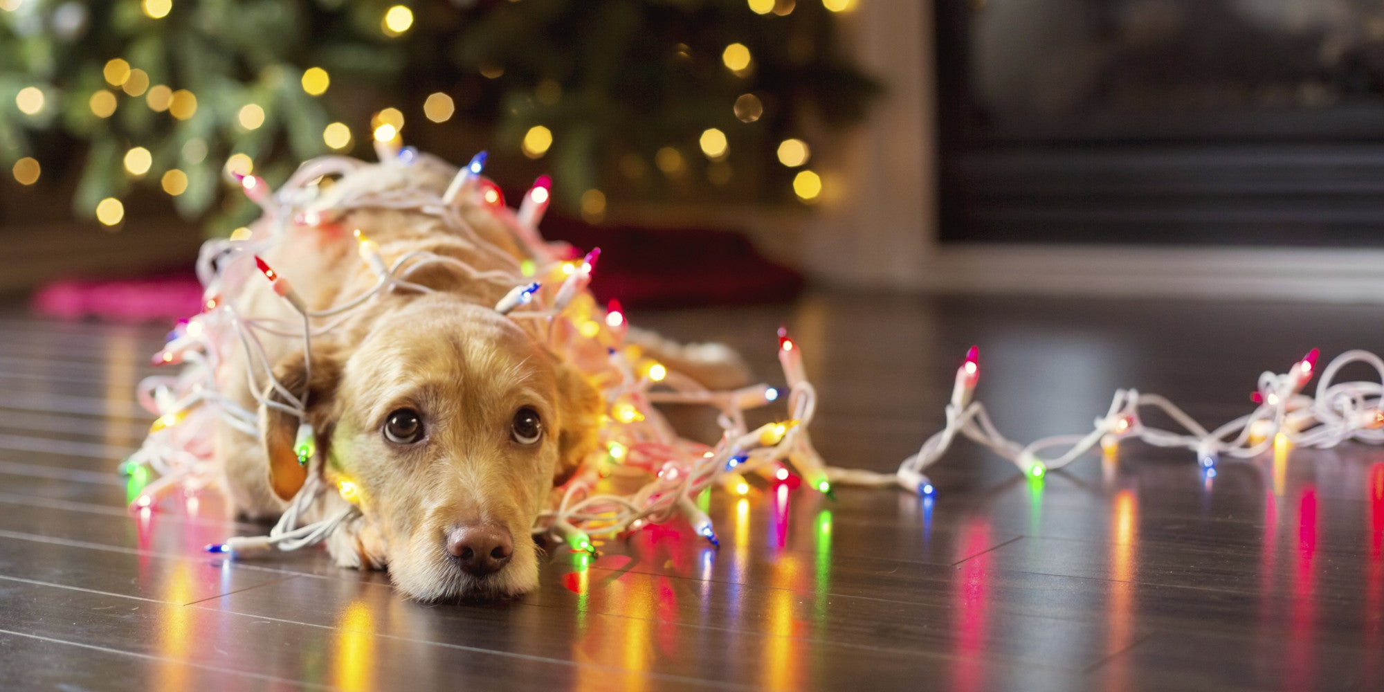12 Wishes For A Pawfect Christmas