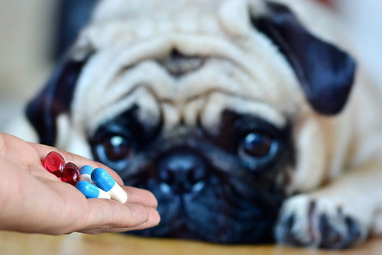 What human medications are safe for dogs to use?