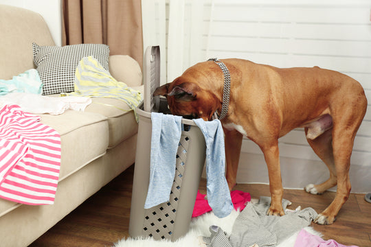 Best hygiene tips for dogs
