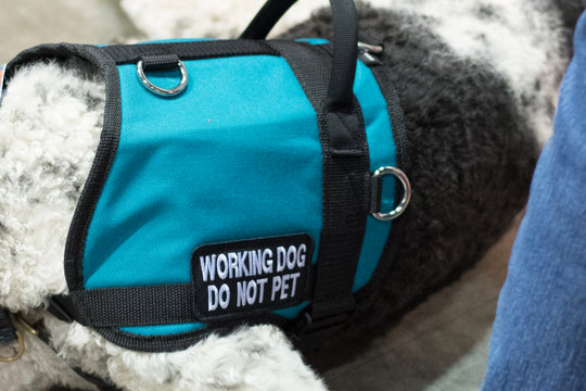 What is the difference between a service dog, a therapy dog, and an emotional support dog?