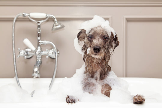 What are some bathing tips for dogs that don't like water?