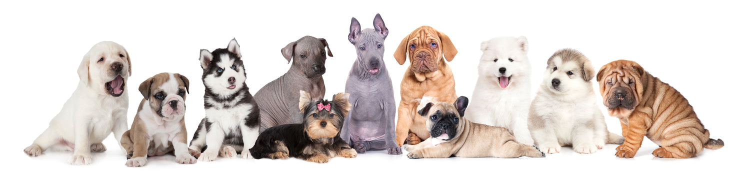 different types of dogs and their breeds group shot