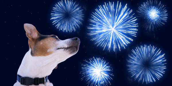 dog scared of blue fireworks