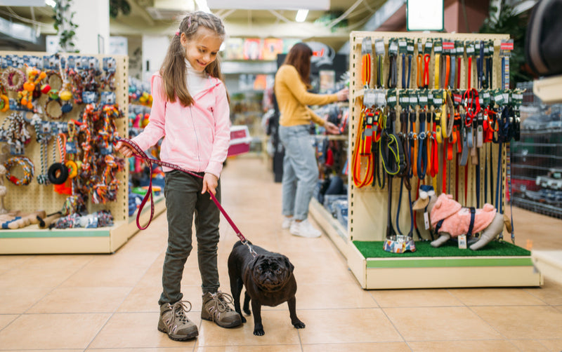 little girl in pet shop with pug shopping for supplies