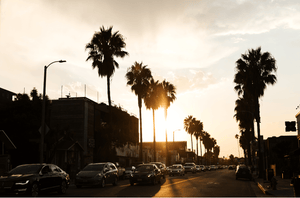 Neighborhood Guide: Abbot Kinney