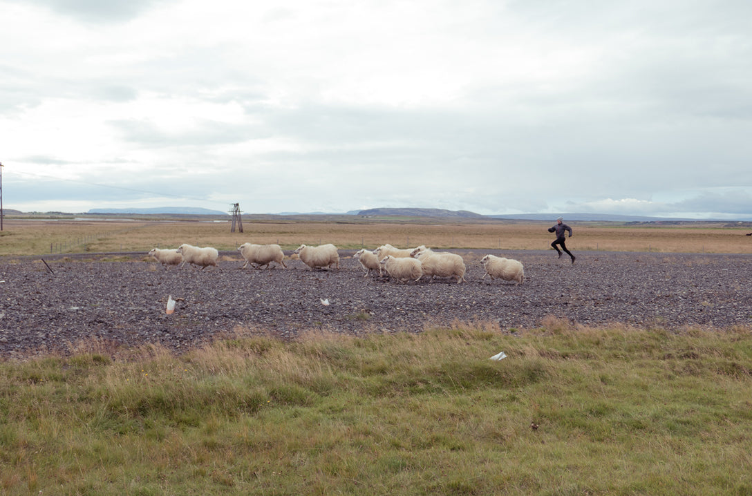 Garrett Leight Cristina Dunlap Sheep Story