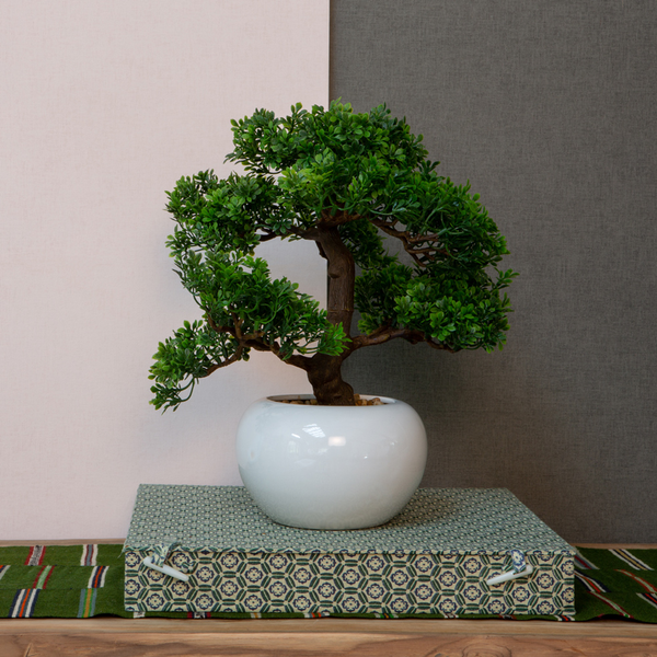 Bonsai in pot large leaves h33cm
