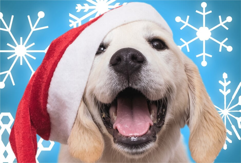 puppy in a red santa hat with blue background and snowflakes micro puzzle jigsaw
