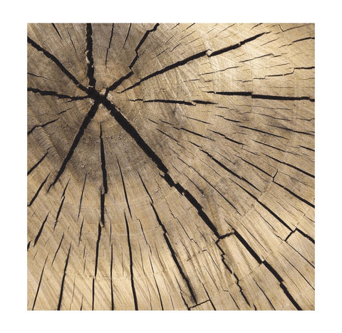 Timber Charger/ Placemat- Set of 30