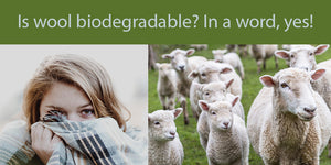 Is wool biodegradeable? In a word, yes!