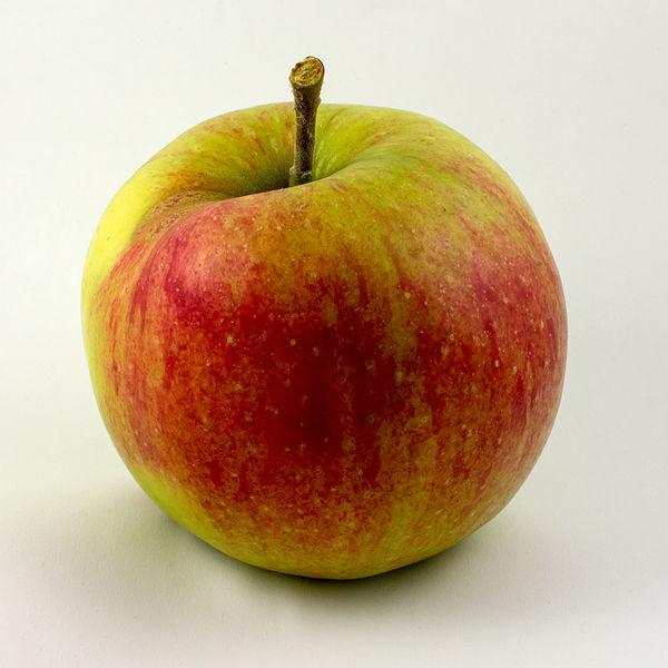 Apple - Ambrosia