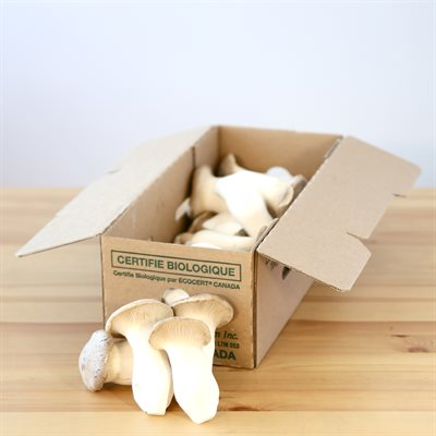Mushrooms - King Oyster Organic Ontario