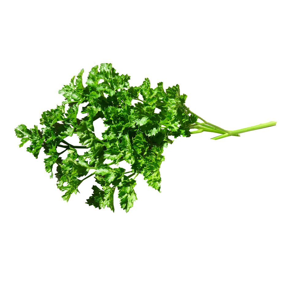 Parsley - Curly Fresh