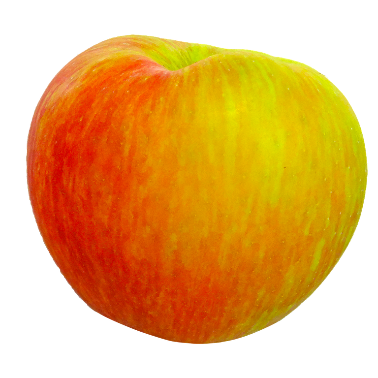 Apple - Honey Crisp