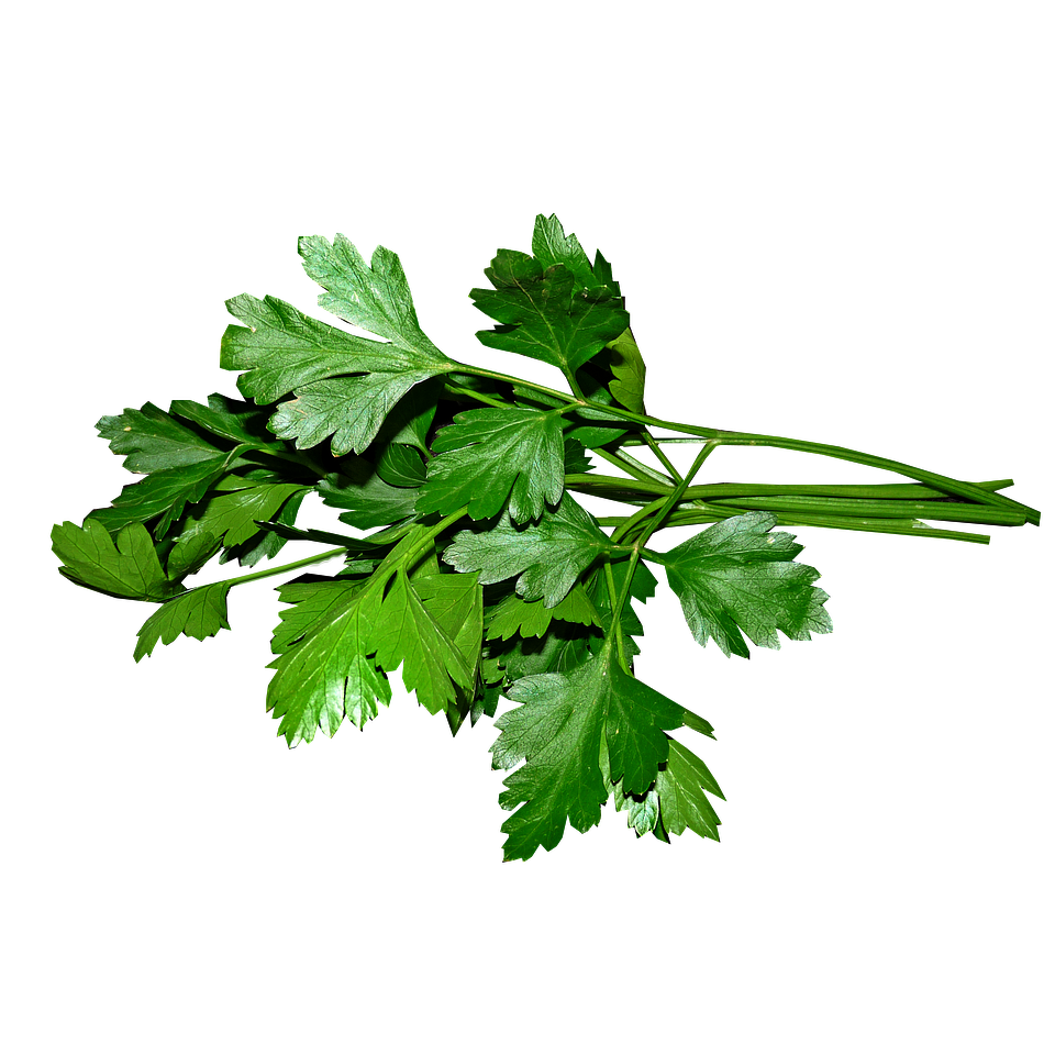 Parsley - Flat Italian Fresh