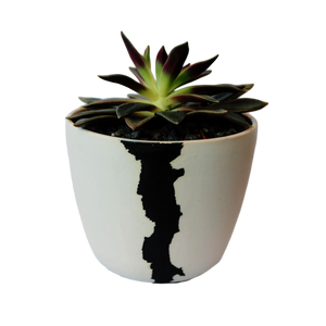 BTW Ceramics Medium White Crater Planter with Plant