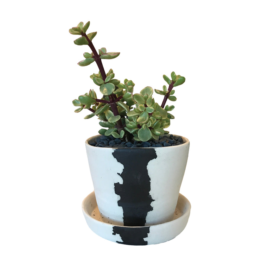 BTW Ceramics Mini White Crater Planter with Plant