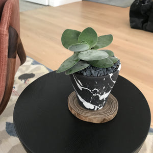 BTW Ceramics Small Black Torrent Planter with Plant