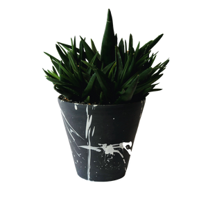 BTW Ceramics Large Black Torrent Planter with Plant