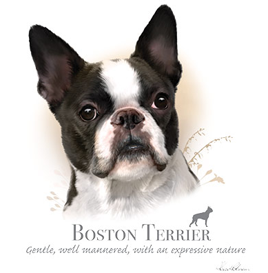 Boston Terrier Tshirt - TshirtNow.net - 1