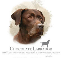 Chocolate Lab Tshirt