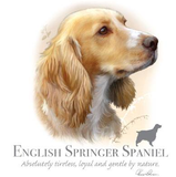 English Springer Spaniel Tshirt - TshirtNow.net - 2