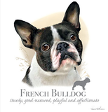 French Bulldog Tshirt - TshirtNow.net - 2