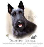 Scottish Terrier Tshirt - TshirtNow.net - 2